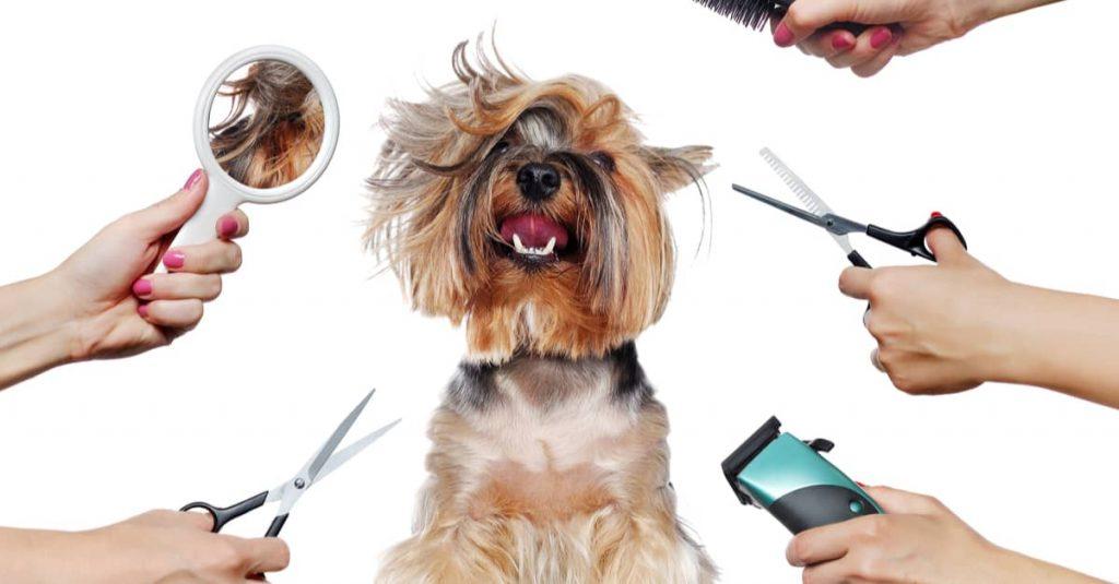 Buying Grooming Tools At poodleexpert-com