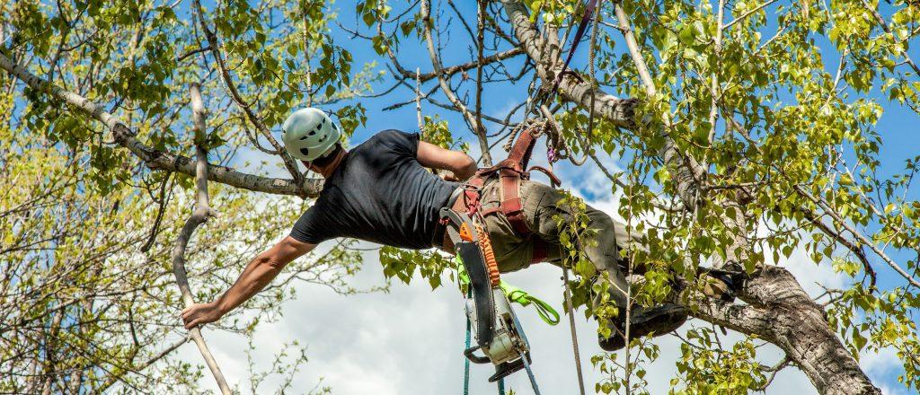 Tree Services In Hendersonville, TN